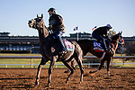 November 4, 2020: Outadore, trained by trainer Wesley A. Ward, and Come Dancing, trained by trainer Carlos Martin, exercise in preparation for the Breeders' Cup Filly & Mare Sprint at Keeneland Racetrack in Lexington, Kentucky on November 4, 2020. Gabriella Audi/Eclipse Sportswire/Breeder's Cup/CSM