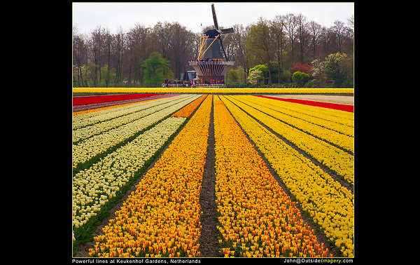 Netherlands, Keukenhof Gardens.  Kinds of Lines.<br /> Vertical lines that lead to your subject (windmill) make a powerful composition. These lines are dynamic because they direct the eye through the composition.<br /> Vertical lines (a tree) and horizontal lines (a fence) along the EDGES of your composition, tend to be static, but make very effective frames. Photoshop composite.