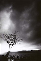 Solitary tree<br />