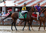 Discreet Lover (no. 5) in the Post Parade for the  Whitney Stakes (Grade I), Aug. 4, 2018 at the Saratoga Race Course, Saratoga Springs, NY.  Ridden by Manuel Franco.  (Bruce Dudek/Eclipse Sportswire)