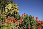 G-353 Cactus garden in kibbutz Saad