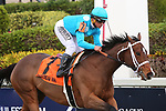 January 18, 2020: #7 Starship Jubilee with jockey Javier Castellano on board wins the Sunshine Millions Filly and Mare Turf Stakes Black Type at Gulfstream Park in Hallandale Beach, Florida, on January 18th, 2020. LizLamont/Eclipse Sportswire/CSM