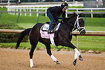 LOUISVILLE, KY - MAY 04: Mo d'Amour, trained by Todd Pletcher, exercises and prepares during morning workouts for the Kentucky Derby and Kentucky Oaks at Churchill Downs on May 4, 2016 in Louisville, Kentucky.(Photo by Samantha Bussanch/Eclipse Sportswire/Getty Images)