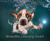 REALISTIC ANIMALS, REALISTISCHE TIERE, ANIMALES REALISTICOS, dogs, paintings+++++SethC_Atticus_IMG_0748v9bookwork2,USLGSC12,#A#, EVERYDAY ,underwater dogs,photos,fotos ,Seth