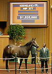 September 15, 2015: Hip 277 Distorted Humor - Forest Music colt consigned by Taylor Made Sales.  Candice Chavez/ESW/CSM