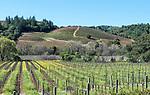 Vineyard at Dutcher Crossing Winery, Geyserville, California