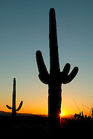 Sunset at Saguaro National Park (Saguaro East), near Tucson, Arizona.