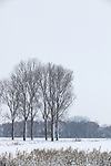 Europa, DEU, Deutschland, Nordrhein Westfalen, NRW, Rheinland, Niederrhein, Straelen, Winter, Schnee, Baeume, Kategorien und Themen, Natur, Umwelt, Landschaft, Jahreszeiten, Stimmungen, Landschaftsfotografie, Landschaften, Landschaftsphoto, Landschaftsphotographie, Wetter, Wetterelemente, Wetterlage, Wetterkunde, Witterung, Witterungsbedingungen, Wettererscheinungen, Meteorologie, Wettervorhersage....[Fuer die Nutzung gelten die jeweils gueltigen Allgemeinen Liefer-und Geschaeftsbedingungen. Nutzung nur gegen Verwendungsmeldung und Nachweis. Download der AGB unter http://www.image-box.com oder werden auf Anfrage zugesendet. Freigabe ist vorher erforderlich. Jede Nutzung des Fotos ist honorarpflichtig gemaess derzeit gueltiger MFM Liste - Kontakt, Uwe Schmid-Fotografie, Duisburg, Tel. (+49).2065.677997, ..archiv@image-box.com, www.image-box.com]