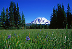 Mount Adams looms over Muddy Meadows and the Mount Adams Wilderness, a popular approach route.