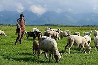 ROMANIA Transylvania, grazing goats and sheeps in front of Fagaras mountains  / RUMAENIEN Transsilvanien Siebenbuergen, Arpasu de Sus, grasende Ziegen und Schafe auf Weide vor Fagaras Gebirge
