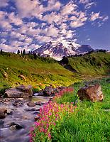 Monkey Flowers, Edith Creek and Mt. Rainier. Washington