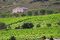 The ruin of a vineyard hut of a type locally called Jasse, which has given its name to the domaine. Domaine La Jasse Castel. Montpeyroux. Languedoc. A tool shed hut in the vineyard. France. Europe. Vineyard.