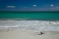 Seagull on Beach, Bahia Honda Key State Park, Florida Keys, FL, America, USA.