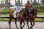 CERRITOS, CA  DECEMBER 07:  #2 Bast, ridden by Drayden Van Dyke, in the post parade of The Starlet (Grade 1) on December 7, 2019, at Los Alamitos Race Course in Cerritos, CA.  (Photo by Casey Phillips/Eclipse Sportswire/CSM)