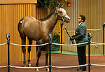 September 14, 2015: Hip 24 Speightstown - Well Monied filly consigned by Eaton Sales.  Candice Chavez/ESW/CSM