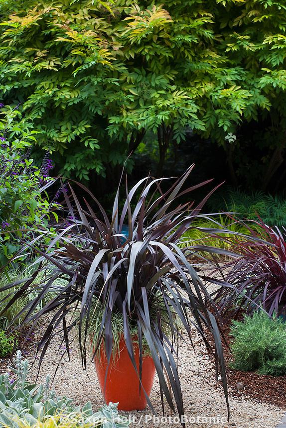 Phormium 'Black Adder' dark foliage perennial in orange container, Sunset Western Garden Collection