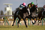 FUCHU,JAPAN-FEBRUARY 11: Admire Miyabi #15,ridden by Christophe Lemaire,wins the Queen Cup at Tokyo Racecourse on February 11,2017 in Fuchu,Tokyo,Japan (Photo by Kaz Ishida/Eclipse Sportswire/Getty Images)