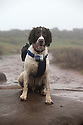 05/01/16<br /> <br /> A dog's walk is tracked on a GPS to find out how much further it runs compared to its two-legged owners.<br /> <br /> Full story here:<br /> <br /> http://www.fstoppress.com/articles/gps-dog/<br /> <br /> <br /> .With Video: https://www.youtube.com/watch?v=o23k_0SD3Ow<br /> <br /> <br /> All Rights Reserved: F Stop Press Ltd. +44(0)1335 418365   +44 (0)7765 242650 www.fstoppress.com