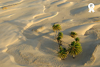Tunisia, Douz, Sahara Desert, palm trees and sand dunes, aerial view (Licence this image exclusively with Getty: http://www.gettyimages.com/detail/sb10065474ci-001 )