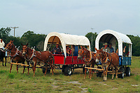 Wagons pulled by donkeys during the parade of the annual trailride in Bandera, South of Texas, USA, United States. The Great Western Cattle Trail - also known as the Dodge City Trail and the Old Texas Trail was known for cattle drives (including Longhorns) to the markets in the eastern part of the USA. The trail began in Bandera County, Texas and ended in Dodge City, Kansas. The entire trail extended from southern Texas to the Canadian border.(No MR)
