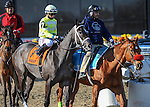 OZONE PARK, NY - JANUARY 30: Sunny Ridge #7, ridden by Manuel Franco, crosses the finish line while holding off Vorticity #5 and winning the Withers Stakes at Aqueduct Racetrack on January 30, 2016 in Ozone Park, NY. (Photo by Sophie Shore/Getty Images)