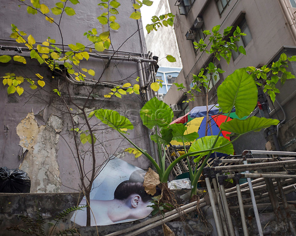 Hongkong, China, Asien, urbane Flora<br />  ***Keine Social_Media Nutzung***<br /> <br /> Engl.: Asia, China, Hong Kong, urban flora, plant, facades, houses, poster<br /> ***No social media use***