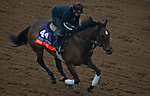 DEL MAR, CA - OCTOBER 31: War Flag, owned by Joseph Allen, LLC and trained by Claude R. McGaughey III, exercises in preparation for Breeders' Cup Filly & Mare Turf at Del Mar Thoroughbred Club on October 31, 2017 in Del Mar, California. (Photo by Michael McInally/Eclipse Sportswire/Breeders Cup)