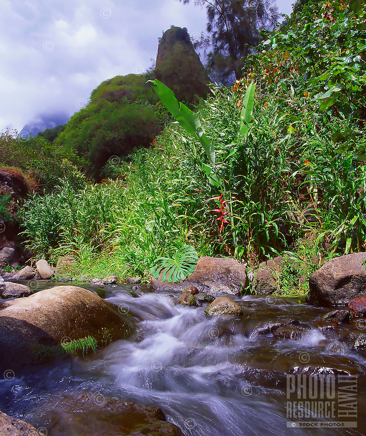 """'Iao Stream in 'Iao Valley, West Maui. Considered one of Hawai'i's most historical and sacred places, 'Iao Valley is the site of the 1790 Battle of Kepaniwai (or """"the damming of the waters"""" by fallen warriors). Behind the stream is 'Iao Needle, rising 1,200 feet above the valley floor and approximately 2,250 feet above sea level."""