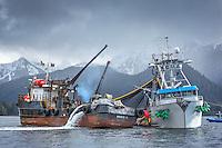 2014 Sitka Sac Roe Herring Fishery Portfolio