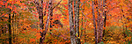 Fall colors on the north shore of Lake Superior, Superior National Forest, Minnesota.