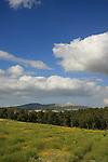 Mount Gilboa forest