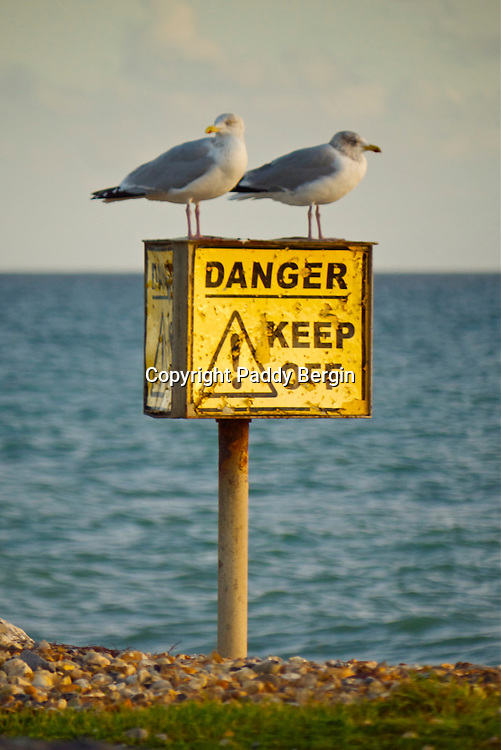 Two seagulls resting on a keep off sign on Worthing Beach, West Sussex.<br />