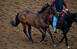 DEL MAR, CA - OCTOBER 01: Lady Aurelia, owned by Stonestreet Stables, LLC & Peter Leidel and trained by Wesley A. Ward, exercises in preparation for Breeders' Cup Turf Sprint at Del Mar Thoroughbred Club on October 1, 2017 in Del Mar, California. (Photo by Michael McInally/Eclipse Sportswire/Breeders Cup)