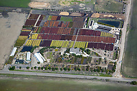 aerial photograph nursery, flower farm, Ventura, California