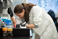 Biological Sciences Ph.D. student Maile Branson prepares samples of genetic material from birds to test for viruses in Professor Eric Bortz' lab in UAA's ConocoPhillips Integrated Science Building.