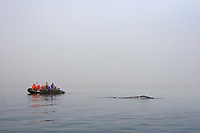 gray watchers looking for California Gray grays (Eschrichtius robustus) in the fog in Magdalena Bay near Puerto Lopez Mateos on the Pacific Ocean side of the Baja Peninsula, Baja California Sur, Mexico. Each winter thousands of California gray whales migrate from the Bering and Chukchi seas to breed and calf in the warm water lagoons of Baja. This is the furthest sout of the three major such lagoons. Current (2008) population estimates put the California Gray gray at between 20,000 and 24,000 animals.