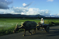 PHILIPPINES Palawan, farmer with water buffalo wagon in front of paddy fields / Philippinen Palawan, Bauer mit einem Wasserbueffel Karren vor Reisfeldern