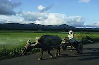 PHILIPPINES Palawan, farmer with water buffalo wagon in front of paddy fields / Philippinen Palawan, Bauer mit einem Wasserbueffel Karren vor Reisfeldern