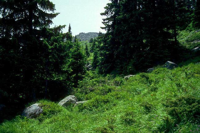 Mt. Vitosha Summit