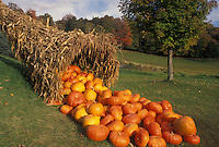 AJ4578, cornucopia, pumpkin, autumn, fall decoration, Vermont, A large cornucopia made with cornstalks and filled with pumpkins is displayed as a fall decoration at Morse Farm in Montpelier in Washington County in the state of Vermont.