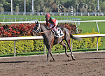 06 February 2010:  Saturday in May with jockey Ramon Dominguez in the Sixth race at Gulfstream Park in Hallandale Beach, FL.