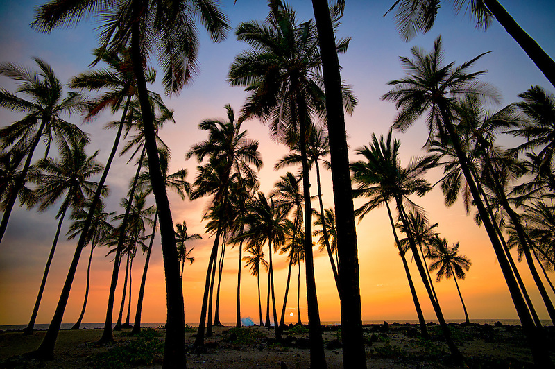 Palm trees at The Place of Refuge with sunset. Honaunau National Historic Park. The Big Island, Hawaii.