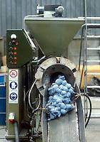 - Cadauta company, machine for homogenization of recycled plastic....- ditta Cadauta, macchina per l'omogenizzazione della plastica riciclata