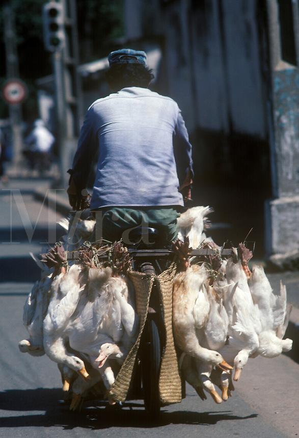 Vietnamese man transporting geese to market