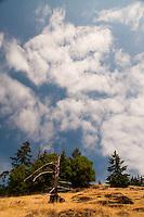 Young Hill, San Juan Island, Washington, US