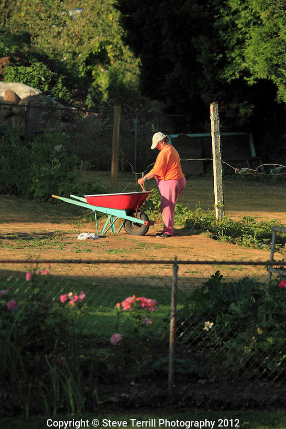 Kathy painting wheelbarrow across the street from me