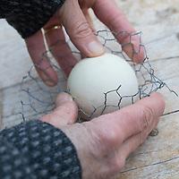 """Knödelschaukel, Knödel-Körbchen, Meisenknödel-Schaukel, Halterung basteln für Meisenknödel aus Maschendraht, Kaninchendraht und Schnur. Schritt 3: Kaninchendraht wird zur Hälfte um einen Ball gebogen, um eine Körbchenform zu erhalten. Selbstgemachte Fettfuttermischung, Fettfutter aus Kokosfett, Sonnenblumenkernen, Erdnussbruch, Körnermix, Körnermischung, Sonnenblumenöl, Vogelfutter selbst herstellen, Vogelfutter selber machen, Vogelfutter selbermachen, Vogelfütterung, Fütterung, bird's feeding, """"upcycling, Wiederverwertung"""""""