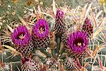 Desert Plants, Cacti, Succulents