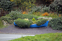 A boat full of plants in Cemaes, north Wales, UK. Sunday 30 October 2016