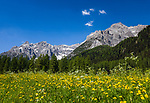 Italy, South Tyrol (Trentino - Alto Adige), near Sexten, district Moos: the picturesque Fischleintal (Val Fiscalina) at Drei Zinnen Nature Park (Parco Naturale Tre Cime) side valley of Sexten Valley (Valle di Sesto) - and Sexten Dolomites | Italien, Suedtirol, bei Sexten, Ortsteil Moos: das malerische Fischleintal im Naturpark Drei Zinnen - ein Nebental des Sextentals - vor den Sextener Dolomiten